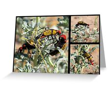 Iron-Cross Blister Beetle ~ Collage Greeting Card