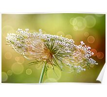 Bokeh Queen Anne's Lace Poster
