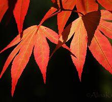 Maple Leaves by Alina Kurbiel