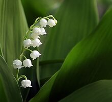 Lily of the Valley by Alina Kurbiel