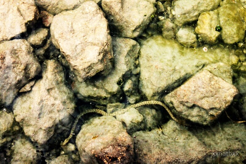 Quot Fresh Water Snake In Lake Garda Quot By Xxnatbxx Redbubble