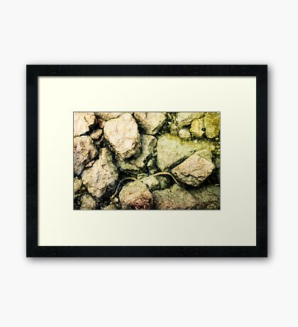 fresh water snake in lake garda Framed Print