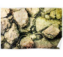fresh water snake in lake garda Poster