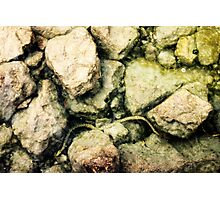 fresh water snake in lake garda Photographic Print