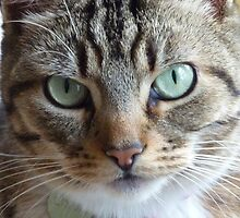 Lixsie the Cat by rightonian