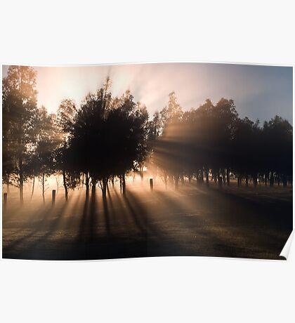Misty Morning - Mount Macedon - Victoria   Poster