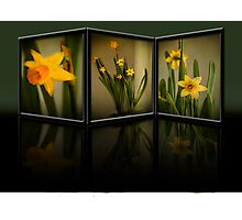 Winter Daffodils  Photographic Print