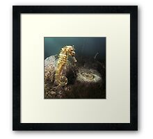 Animals - Seahorse Framed Print