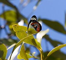 Butterfly - Mon Repos Beach - Australia by Anthony Wilson