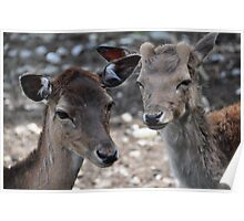 Young Deers Poster