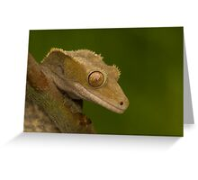 Crested gecko Greeting Card