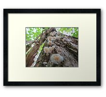 Up the Tree, Up. Framed Print