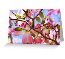 """Looking Up Through The Pink Dogwood Tree"" Greeting Card"