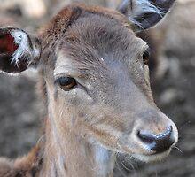 Lovely Deer by Daidalos