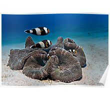 My anemone is my castle... Poster