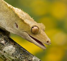 Summer gecko by Angi Wallace