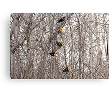 All Blackbirds Canvas Print