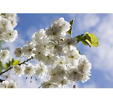 Blossom In The Sky Photographic Print