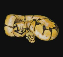Ball python by AngiNelson