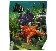 Underwater starfish with sponge and an angelfish Poster