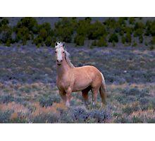 Stallion In SpringTime Photographic Print