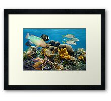 Underwater scenery with fish in a coral reef Framed Print