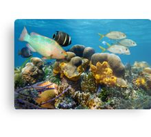 Underwater scenery with fish in a coral reef Metal Print