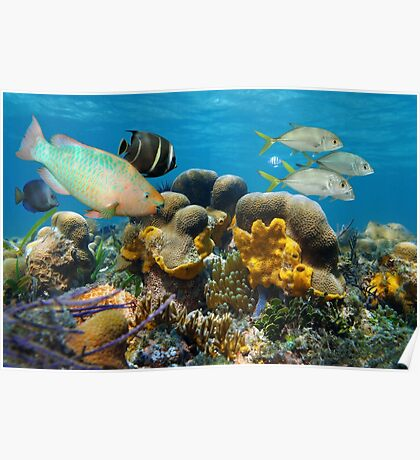 Underwater scenery with fish in a coral reef Poster