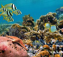 Tropical underwater landscape in a coral reef by Dam - www.seaphotoart.com