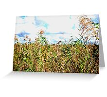 Wheat Fields in Everglades Greeting Card