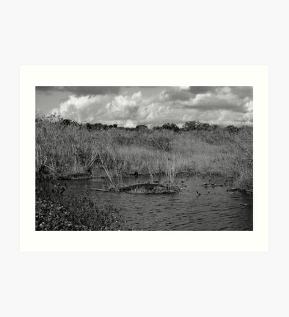 Gator on Island Art Print