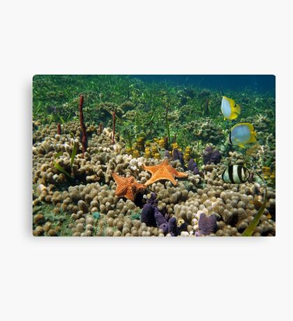 Underwater coral reef with starfish and butterfly fish Canvas Print