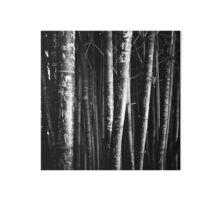scarred bamboo Impression rigide