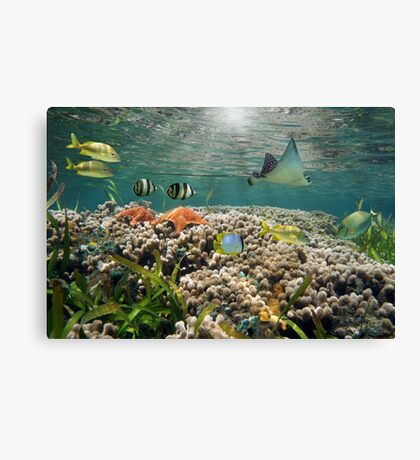Shallow coral reef with tropical fish and an eagle ray Canvas Print
