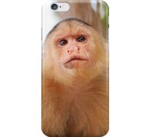 Portrait of a Capuchin monkey iPhone Case/Skin