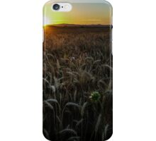 Harvest Time Sunset iPhone Case/Skin