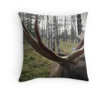 Moose Up Close Throw Pillow