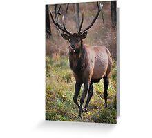 Elk in Timmins, Ontario Greeting Card