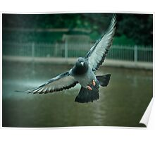 Pigeon in flight - Freedom PT 2.0 Poster
