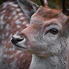 Northern Ontario Deer by Laura Cooper