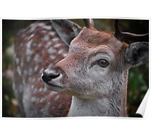 Northern Ontario Deer Poster
