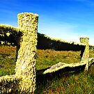 Lichen Fence beyond Licola, High Country, Vic., Australia by Bev Pascoe
