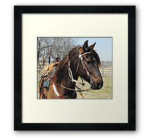Peruvian Paso @Wood Guest Ranch, Oklahoma Framed Print