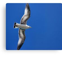 Lake Mead Gull Canvas Print