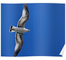 Lake Mead Gull Poster