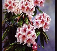 Light Pink Rhododendrum by Carolyn Sterling