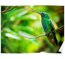 Sparkling Violet Ear Hummingbird Poster