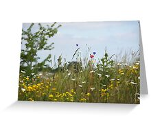 Illustrated summer meadow Greeting Card