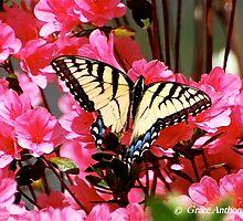 Butterfly Landing by Grace Anthony Zemsky