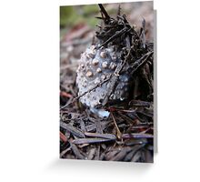 Trap Door Mushroom Greeting Card